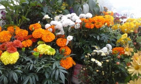 বাংলা একাডেমি প্রাঙ্গণে আগামীকাল থেকে ফুল উৎসব