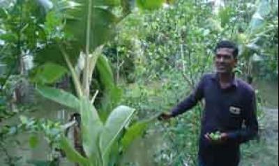 ভোলায় একটি বাড়ি একটি খামার প্রকল্প'র মাধ্যমে সচ্ছল সবুজ বাকলাই