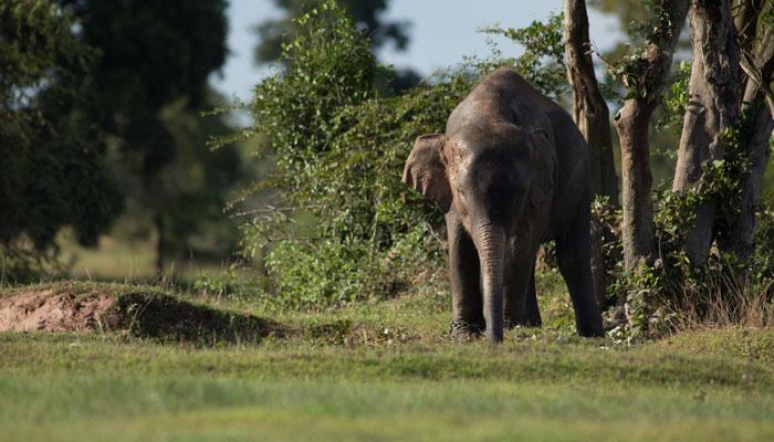 'খুনি হাতি'কে মারতে শ্রেষ্ঠ শিকারিকে আনছে ভারত