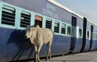 ৫৫ কোটি টাকার গোবর কিনবে ভারত!