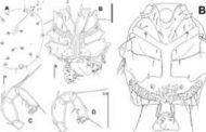 বাংলাদেশী বিজ্ঞানীর সাফল্য: আরো দুই অমেরুদন্ডী প্রাণীর সন্ধান