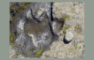 আবার পাওয়া গেল ডাইনোসরের পায়ের ছাপ!
