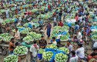 নওগাঁয় বেড়েই চলেছে আমের ফলন, ছাড়িয়ে যাবে চাঁপাইনবাবগঞ্জকেও!
