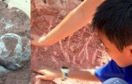 ১১টি ডাইনোসরের ডিম পেল ১০ বছরেরবালক!