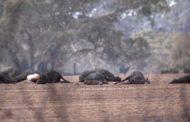 অস্ট্রেলিয়ায় দাবানলে ৫০ কোটি প্রাণীর প্রাণহানি