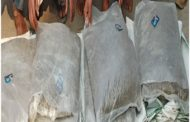 ১৫ কেজি গাঁজাসহ চার মাদক ব্যবসায়ী গ্রেফতার