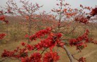 ঘুরে দেখে আসুন ফাগুনের প্রাকৃতিক সৌন্দর্য্য 'শিমুল বাগান'