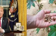 মার্কিন প্রেসিডেন্টকে পাঠানো চিঠিতে পাওয়া গেল মারাত্মক বিষ