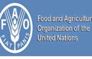 বাংলাদেশ জাতিসংঘের খাদ্য ও কৃষি সংস্থার (এফএও) কাউন্সিলের সদস্য নির্বাচিত